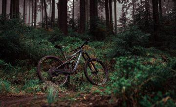 Mountain Bike In Forest